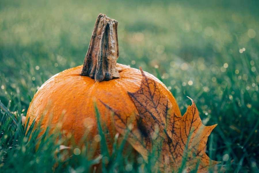 Autuum Pumpkin